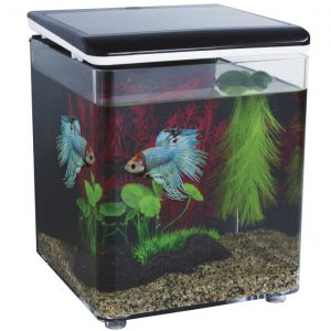 Superfish Home 8