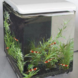 Superfish Betta Home 8 Zwart
