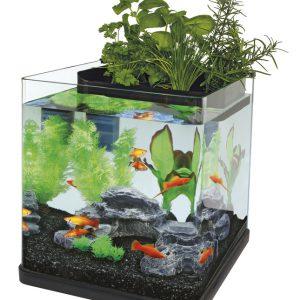 Superfish Aquaponics 23