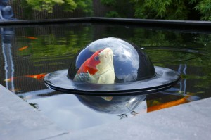 FLOATING FISH SPHERE L 50 CM